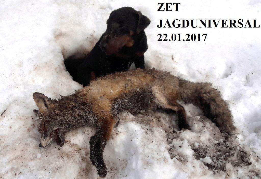20170123-zet_220116__10__cop.jpg
